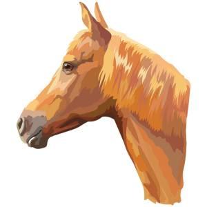 Horse-1-Main-Product-Image