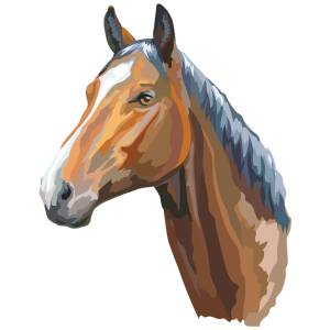 Horse-2-Main-Product-Image