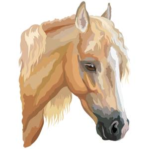 Horse-3-Main-Product-Image