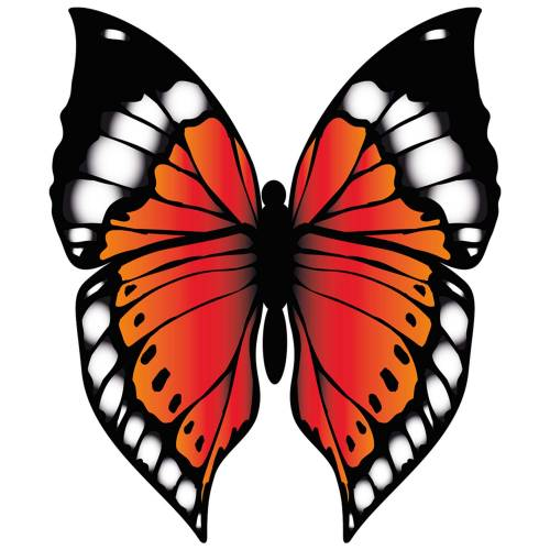 Butterfly-2-Main-Product-Image