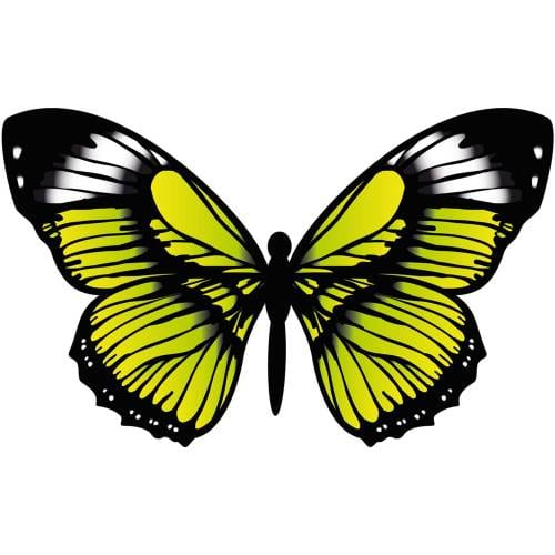 Butterfly-3-Main-Product-Image