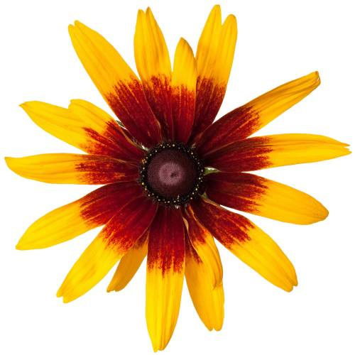 Flower-5-Main-Product-Image