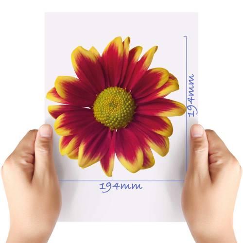 XL-Flower-1-Matt-HTV-Transfer
