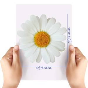 XL-Flower-15-Matt-HTV-Transfer