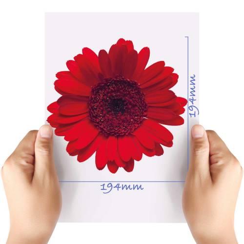 XL-Flower-2-Matt-HTV-Transfer