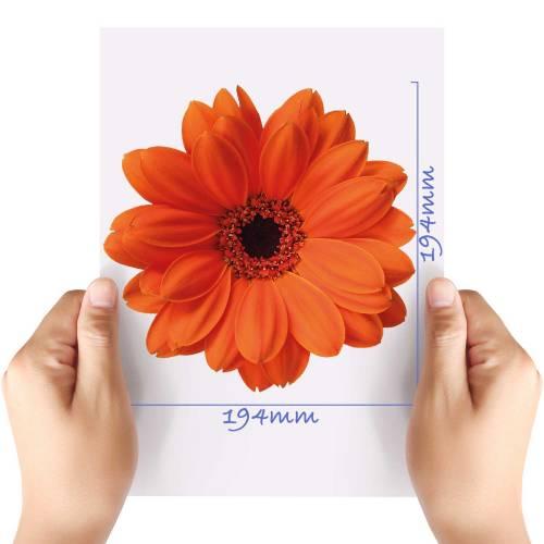 XL-Flower-3-Matt-HTV-Transfer
