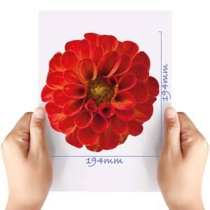 XL-Flower-4-Matt-HTV-Transfer