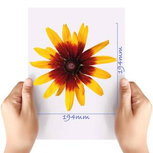 XL-Flower-5-Matt-HTV-Transfer