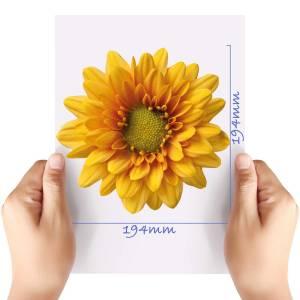 XL-Flower-6-Matt-HTV-Transfer