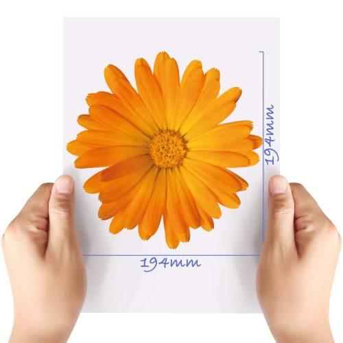 XL-Flower-7-Matt-HTV-Transfer