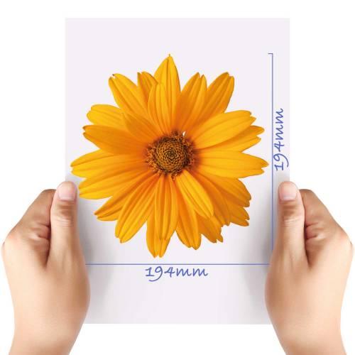 XL-Flower-8-Matt-HTV-Transfer