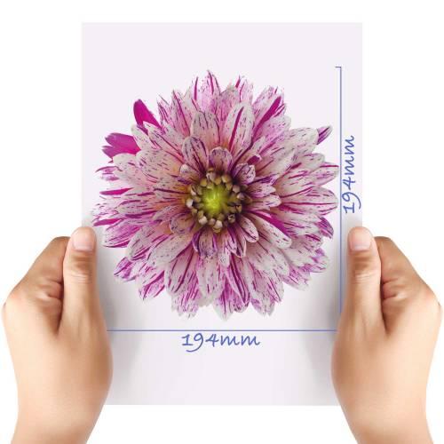 XL-Flower-9-Matt-HTV-Transfer
