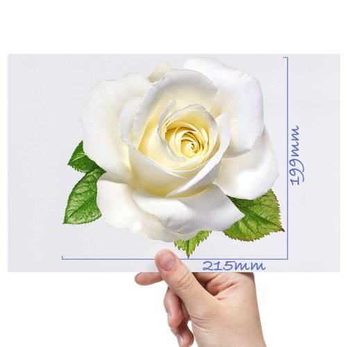 XL-Rose-12-Matt-HTV-Transfer