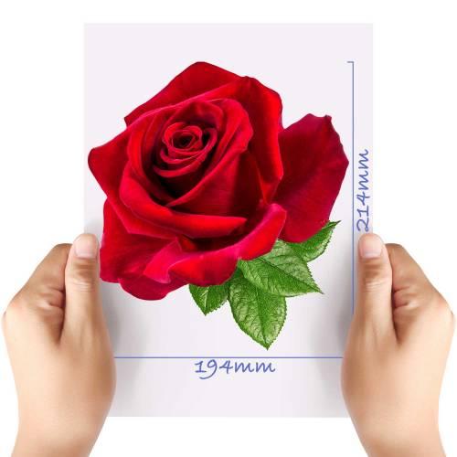 XL-Rose-5-Matt-HTV-Transfer